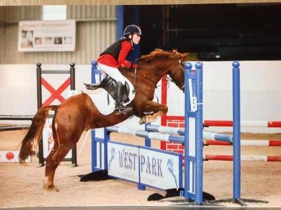 Chester Hwyl Surprise All Rounder Horse for sale!