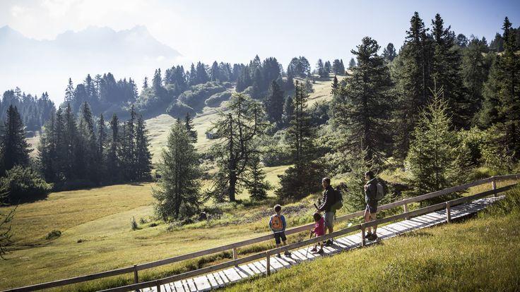 Bezaubernde Ausblicke auf weite Almwiesen und Wäldern