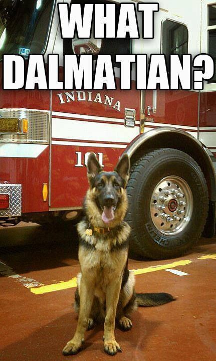 Canines in a firehouse