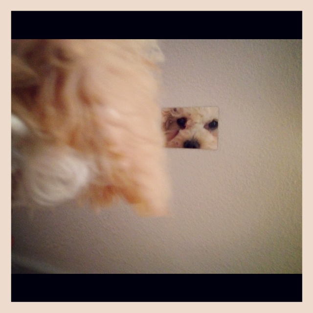 Puppies love our cell phone mirrorZ! Check out our website @http://jkmirror.com/main.sc