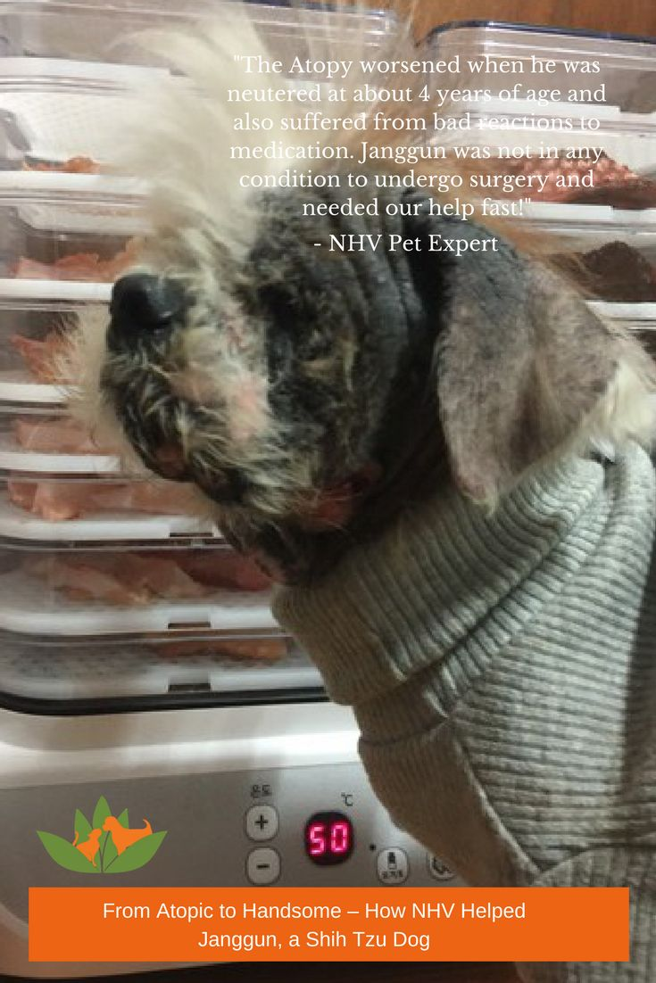 This poor sweet Shih Tzu also suffers from canine anemia, a tumor on his neck, chronic cystitis, bladder calculus, bladder sludge, high BUN levels, chronic ear problems, stomatitis and a mass in his spleen. Janggun was not in any condition to undergo surgery and needed our help fast!  As Janggun's health was so complex, our NHV Pet Experts decided to take a comprehensive approach, which dealt with his overall immunity, as well as some of the conditions he was suffering from the most.