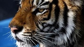 Pétition : Sauvez les animaux de cirque au Mexique !