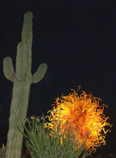 DALE CHIHULY GLASS SCULPTURES AT THE DESERT BOTANICAL GARDEN IN PHOENIX ARIZONA