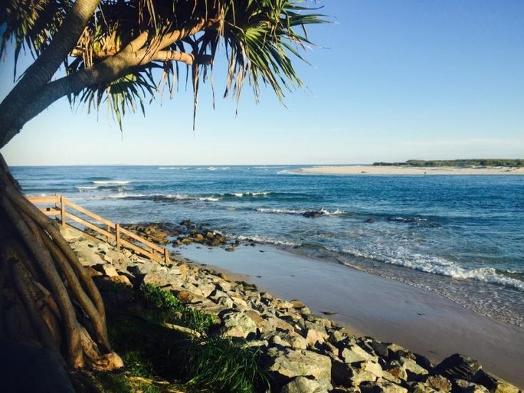 Pandanus Tree Against Kings Beach Caloundra