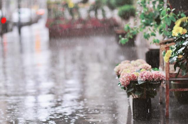 Eső illata a forró járdán (smell of rain on hot pavement)