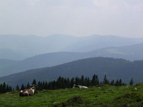 Parc naturel régional des Ballons des Vosges - #Alsace