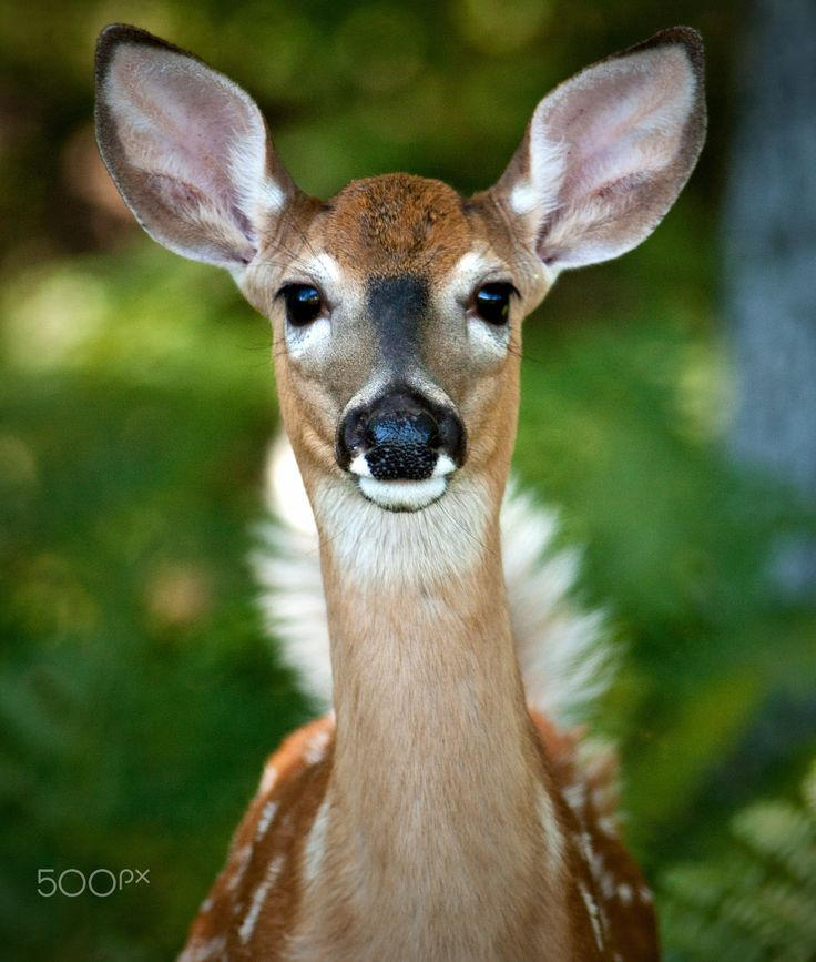 Pin By Helena On Anamals Deer Pictures Animals Critter