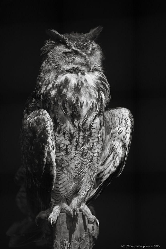 Owl https://flic.kr/p/z1X2uR
