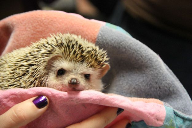 THIS HEDGEHOG'S FACE | The 58 Cutest Things Found Behind The Scenes At The PuppyBowl