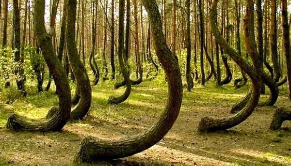 Mantenha-se longe: Está é supostamente a floresta mais assombrada do mundo! - Romênia