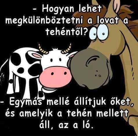 Hogy lehet megkülönböztetni a lovat a tehéntől?