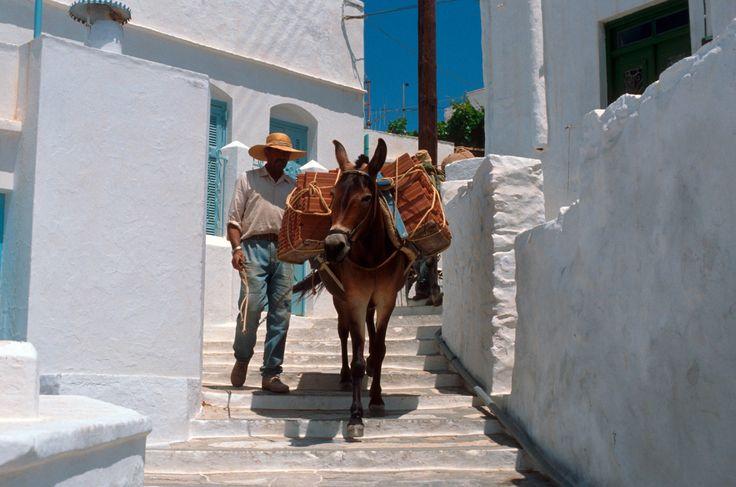 GREECE CHANNEL | Artemonas #donkey and man, #Sifnos #CYCLADES #GREECE http://www.greece-channel.com/