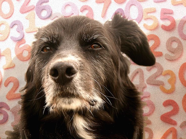 The Mythology of Dog Years -- one year in a dog's life does NOT equal seven in ours (click to read).