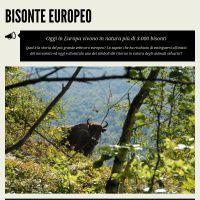 Bisonte europeo, il ritorno Dati: Rewilding Europe, 2013 Author: Paola Siligardi per Biosphaera