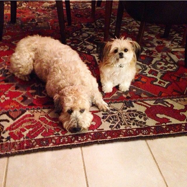 Rocco and Annie