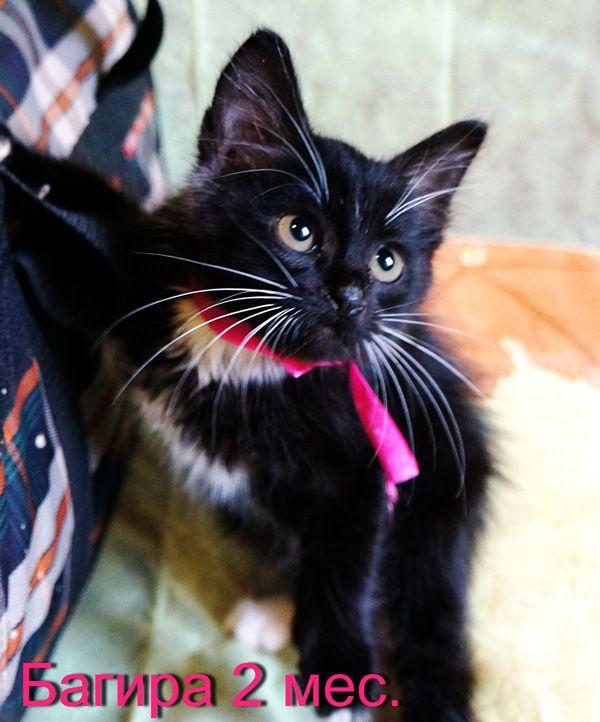 Паразиты у кошек, анкилостомы, цепни, кокцидии, блохи у кошек, клещи у кошек