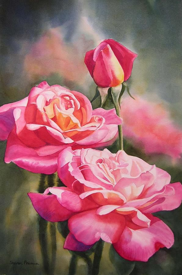 Line then value then color:  Blushing Roses With Bud Painting by Sharon Freeman. edges hard and soft.