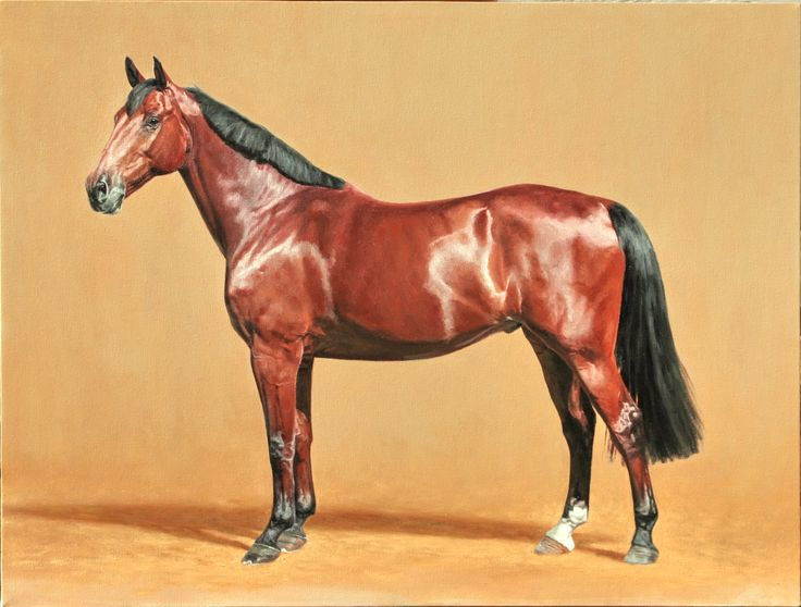 Calypso, oil on canvas, owned and ridden by Anthea Erasmus, Cape Town , SA