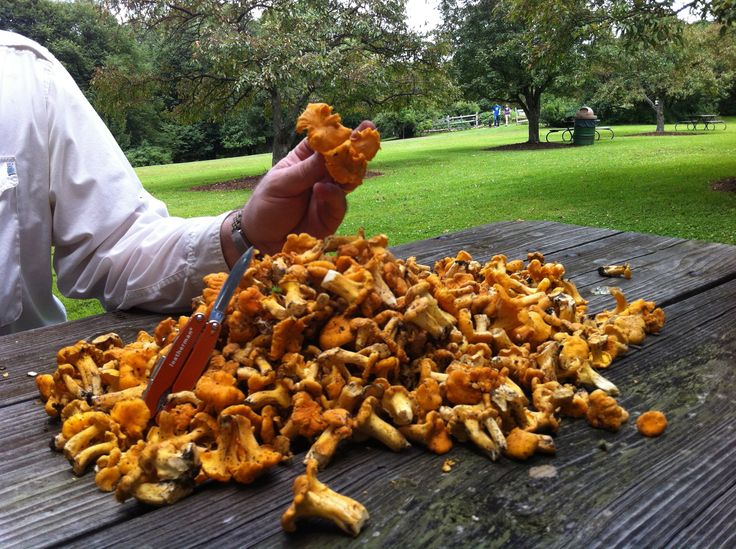 The chanterelle season is upon us and the forest floor under the oaken canopy is littered with orange gems of nutritions goodness. Which is why I haven't blogged in so long - between writing and ed...
