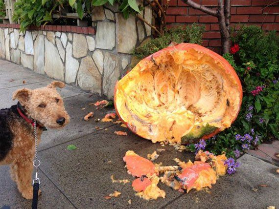 Health Benefits of Pumpkin for Pets – Thanksgiving Food Good for Pets | petMD