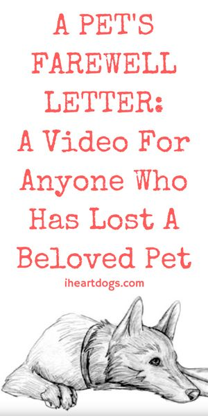 This will make you feel so much love for the dog in your life