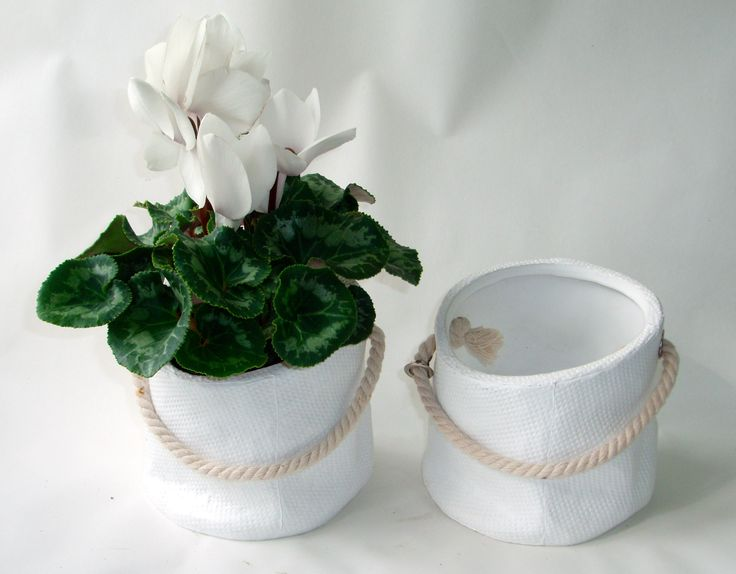 Creamy ceramic pots with rustic rope handle looks great with flowering cyclamen available here www.summerhillnurseries.com.au