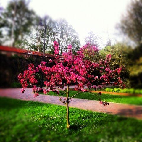 Park Oliwski. Gdansk. #gdansk #tree #nature