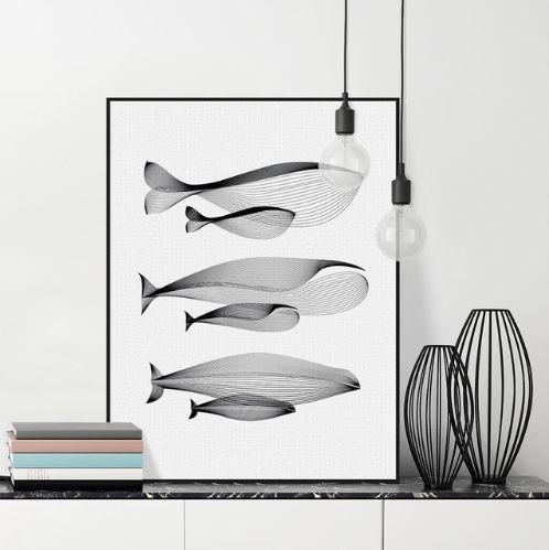 Symmetrical Whale Compilation