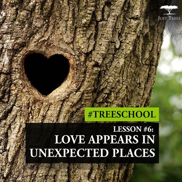 Lesson 6: Love appears in unexpected places #TreeSchool