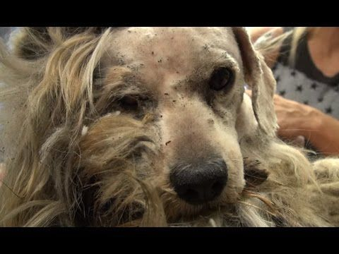 Hope For Paws: Benji was homeless his whole life... WATCH what happens next! Please share. - YouTube