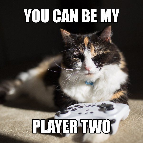 Roses are red,  Violets are blue,  Will you be,  My player 2? RSPCA Queensland's shelters are bursting at the seams and we need your help! Adult cats for $50 until June 19. http://www.rspcaqld.org.au/adopt RSPCAQLD #AdoptMeow #Cat #Gamer #PlayWithMe