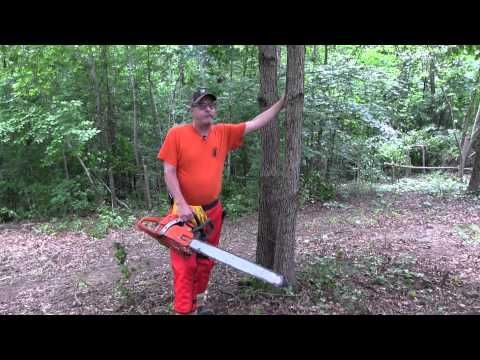 ▶ Hinge Cutting Trees for Deer Habitat: QDMA Workshop 2013 - YouTube