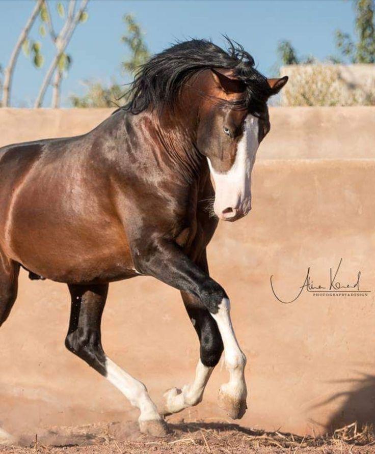 pferd 3d