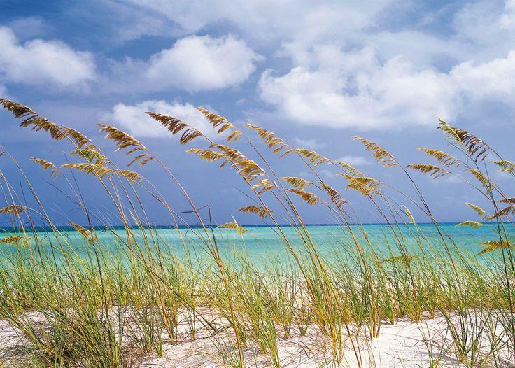 Una brisa fresca acaricia suavemente la duna. Contacta con nosotros al 951 081 159, vía email info@bricotiendas.com o visita nuestra tienda especializada en papeles pintados www.papeles-pintados.es.