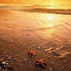 Beachcombing Basics   Seashells   CoastalLiving.com