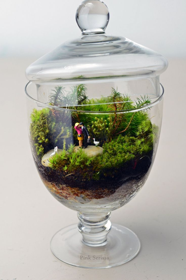 Moss terrarium in miniature apothecary jar Woodland Lovers 2. $55.00, via Etsy.