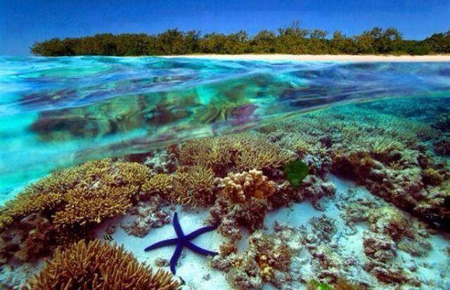 The Great Barrier Reef, Australia