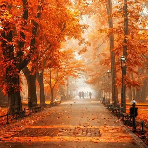 : Fall Leaves, Autumn Leaves, Color, Travel Photo, Central Parks, Travel Tips, Fall Trees, Krakow Poland, Weights Loss