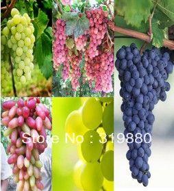 Бесплатная доставка 25 шт. розовый виноград 25 шт. золотой палец виноград 25 шт. черный виноград 25 шт. зеленый виноград фрукты семена