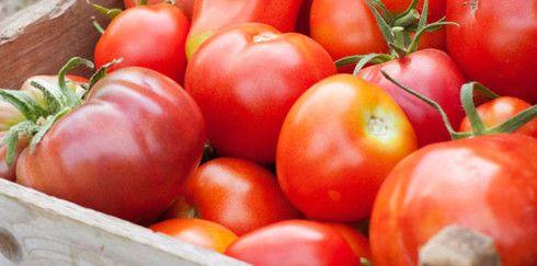 Идея для малого бизнеса: Выращивание овощей