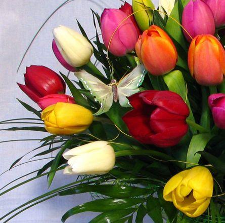 Tulipán...*