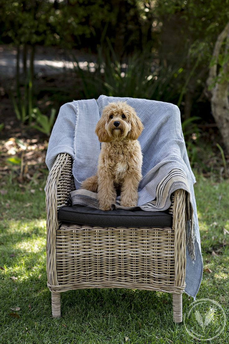 Roco Solid Weave Armchair - Dog not included!  http://www.frenchcountry.co.nz/