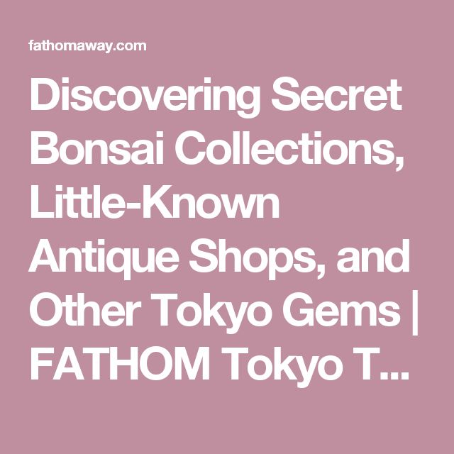 Discovering Secret Bonsai Collections, Little-Known Antique Shops, and Other Tokyo Gems |  FATHOM  Tokyo Travel Guides and Travel Blog