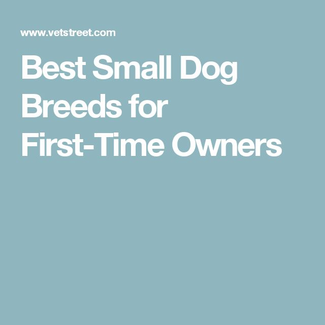 Best Small Dog Breeds for First-Time Owners