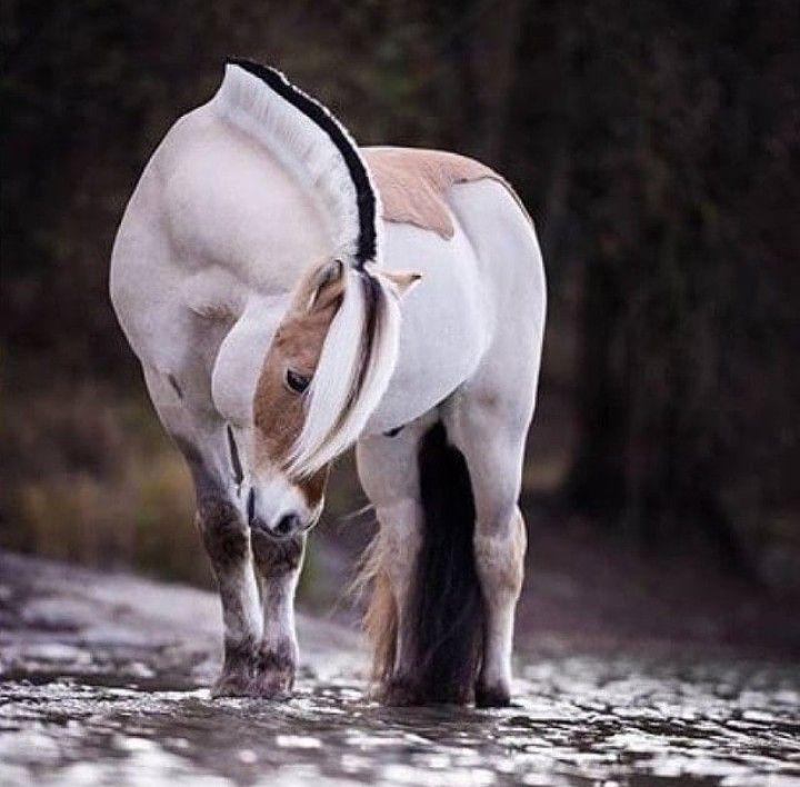 Картинки лошадей со смыслом