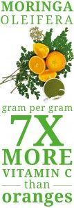 Moringa Oleifera has 7 times More Vitamin C than Oranges