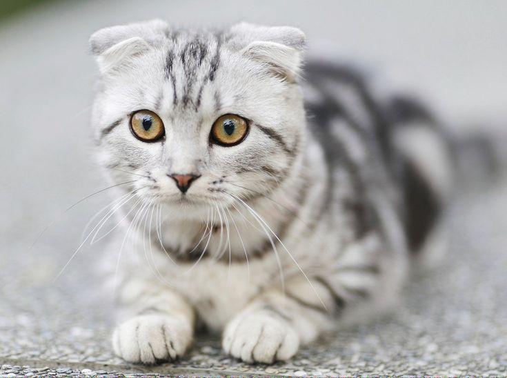 Craigslist Free Kittens Ct