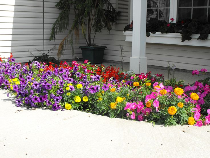 My Front Yard Flower Bed Petunia Impatience Begonias And Marigolds Flower Garden Design