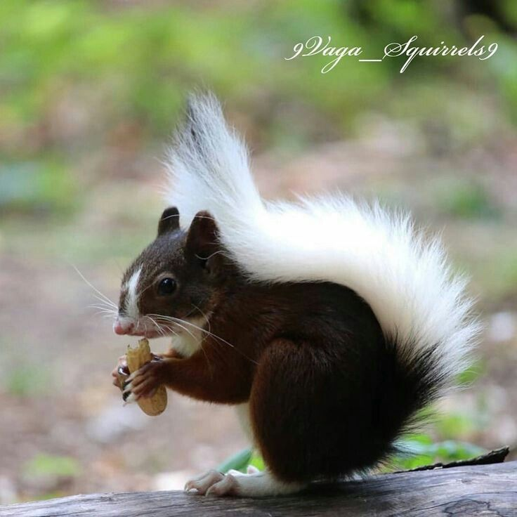 Beautiful Squirrel In 2020 Baby Animals Cute Animal Pictures Cute Animals