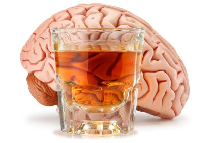 Model of a human brain next to glass of alcohol